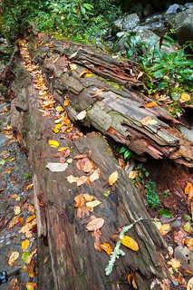 Log and Leaves