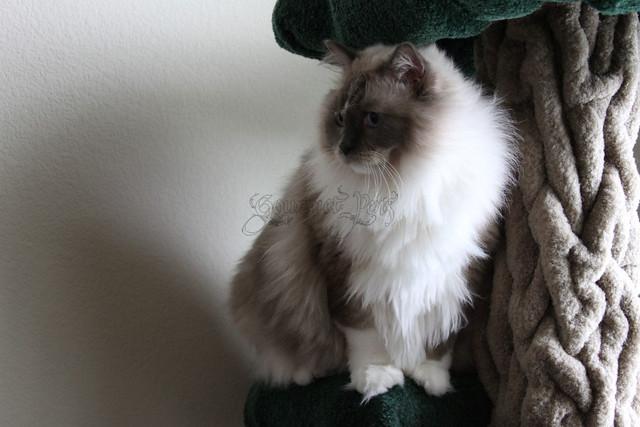 Tyco on Tree