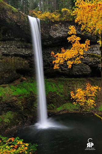 fall leaves yellow oregon waterfallh20