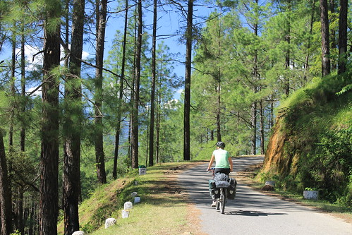 Cycling through pine forests in Uttarakhand
