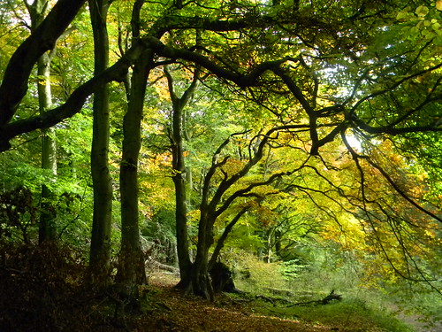 Trees near Pulpit Hill