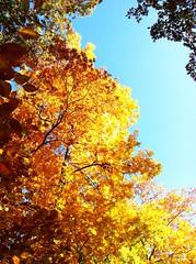 Mason Neck - Fall Foliage
