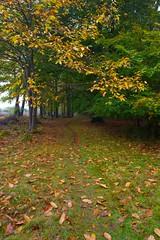 Misty Start to the day at Ashridge