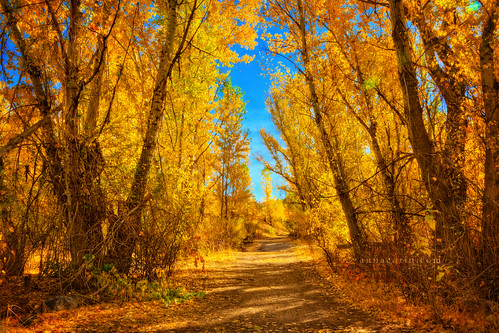 autumn trees fall nature forest canon landscape gold golden woods path sigma idaho boise 7d aspens hdr militaryreservepark dirtpath photomatix 1750mm