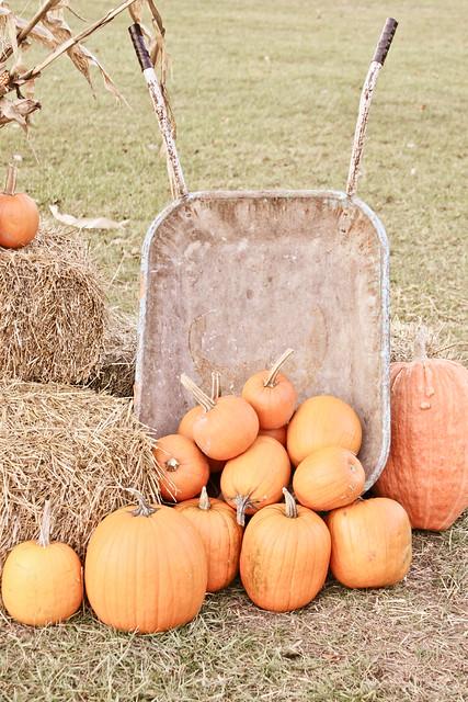 pumpkins_