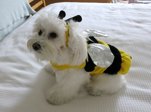 "Happy Halloween from To""BEE"""