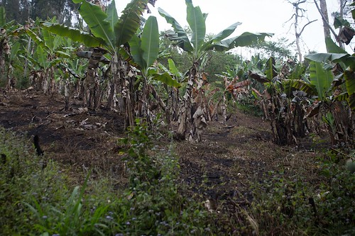 Madagascar -secondary forest, and forest after/during slash and burn