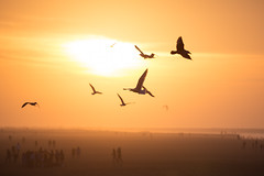 sea(0.0), dawn(0.0), animal migration(1.0), wing(1.0), sun(1.0), morning(1.0), flock(1.0), bird migration(1.0), dusk(1.0), sunset(1.0), sunrise(1.0), bird(1.0), seabird(1.0),