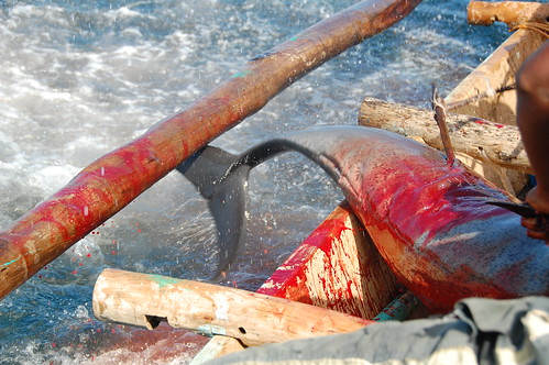 Whale Hunting Indonesia
