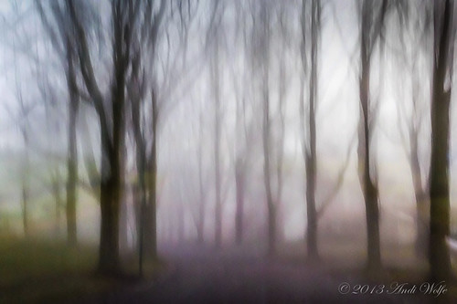 ICM: my foggy street by andiwolfe