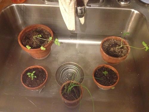 Soaking Herbs
