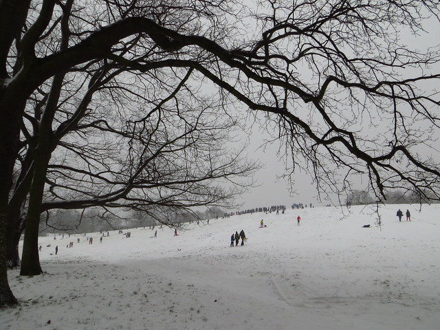 Sledging on Parliament Hill