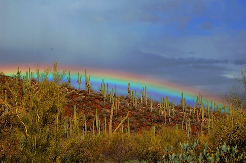 arizona cactus color nature beauty rain yard rainbow desert tucson sonoran pimacounty