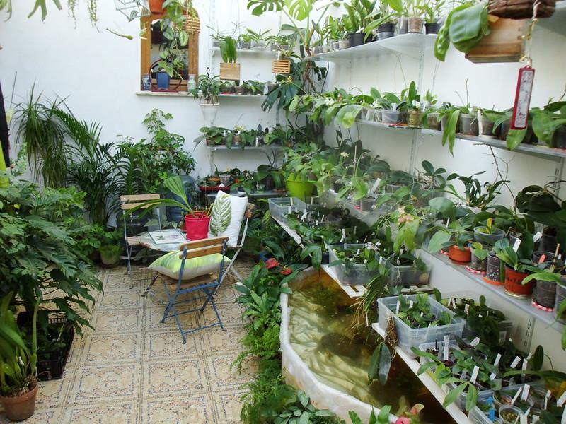 Dans mon Jardin d'Hiver 8430485376_163cf330ae_c