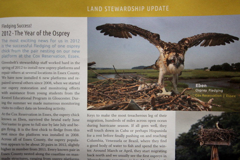 Eben the Osprey