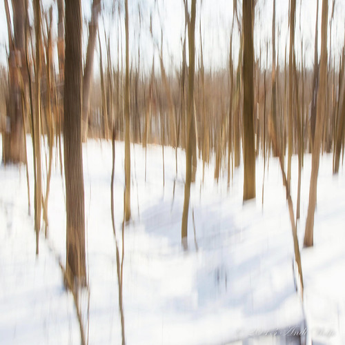 ICM. Snowy Day by andiwolfe