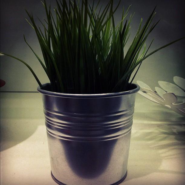 """Vaso para o @jorgewho com a planta """"opção 1"""". (Esta foi a combinação escolhida.) #ikea"""