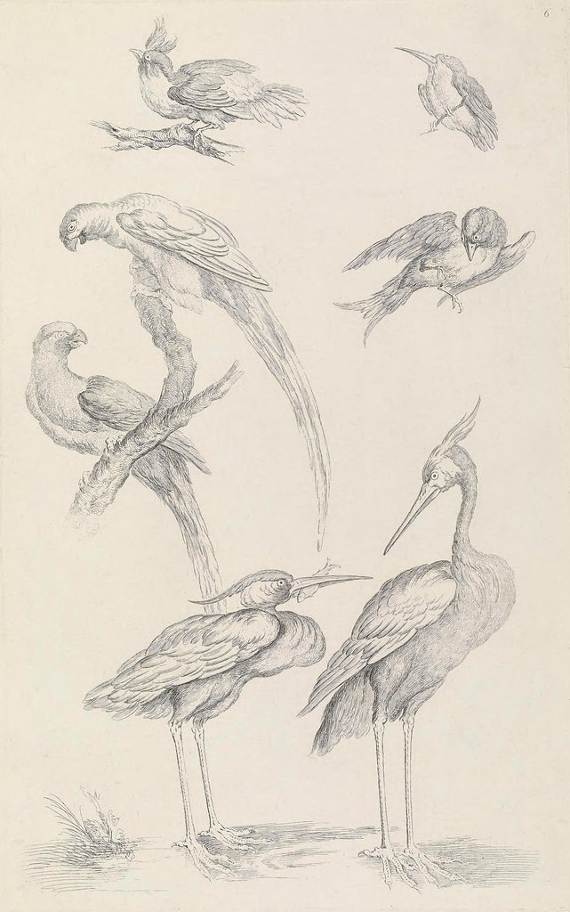 book illustration of Chinese birds 18th century