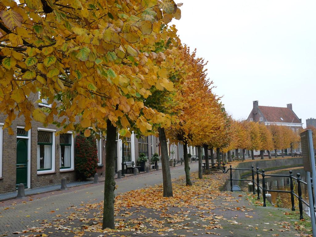 Herfst In Hasselt Heerengracht Bertien Brinkman Hasselt