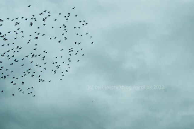 Birds over the motorway, somewhere in Germany.