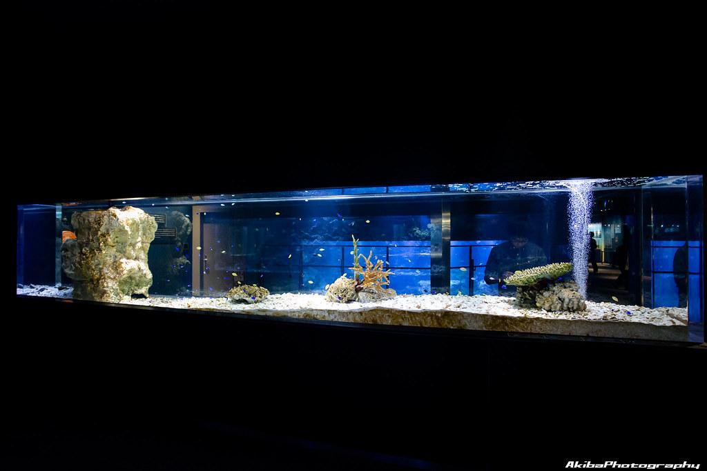 sumida-aquarium#20