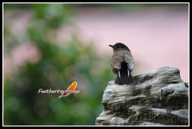 杉林溪鳥拍 PART II