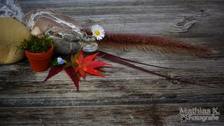Herbstschmuck