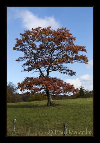 autumn tree fall nc fallcolors northcarolina bluesky fallfoliage foliage blueridgeparkway