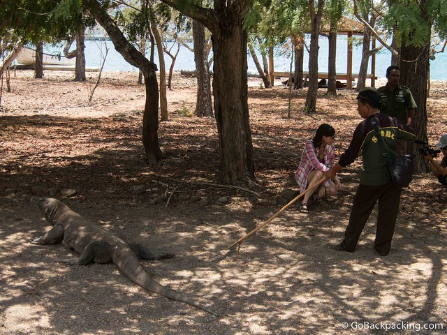 Guides ensure a Komodo dragon keeps its distance from Olga, an Indonesian model and TV personality who joined us for the trip to Komodo Island
