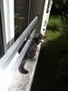 Tounsi à l'eclau sur le rebord de la fenêtre