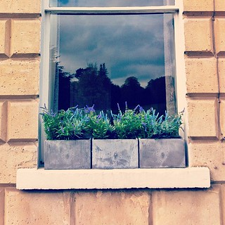 Fancy window boxes #bath