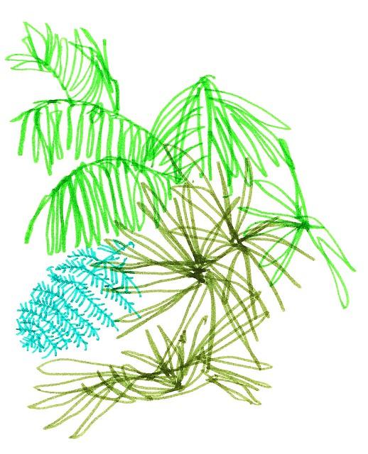 i palmhuset