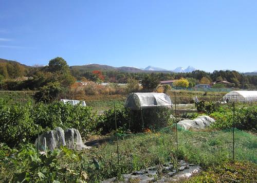 畑と冠雪した八ヶ岳 2012年10月24日10:47 by Poran111