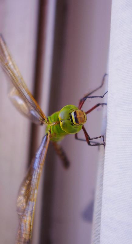 快門  VS  蜻蜓