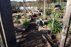 october vegetable garden plot 021