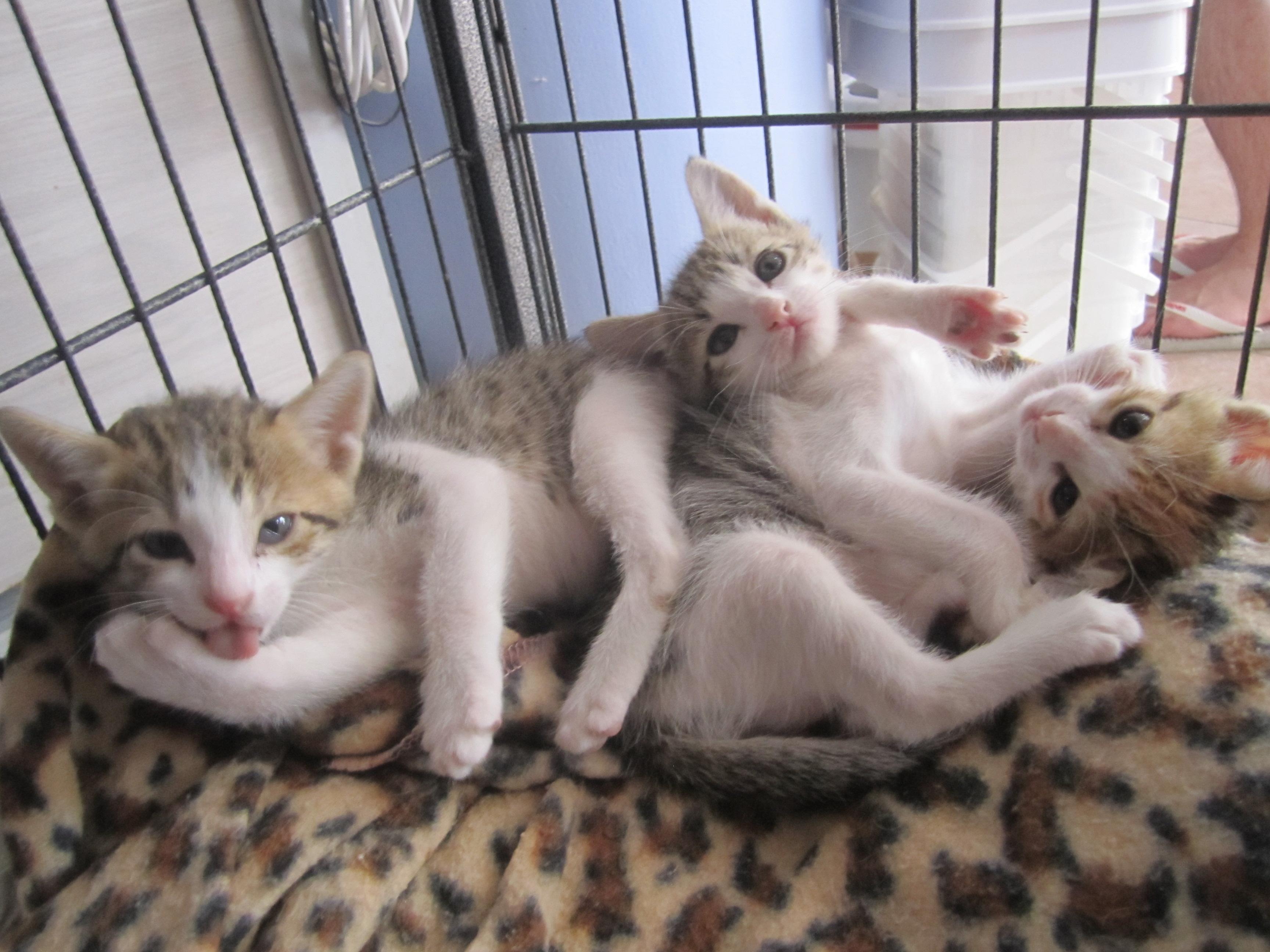 Kittens waking up