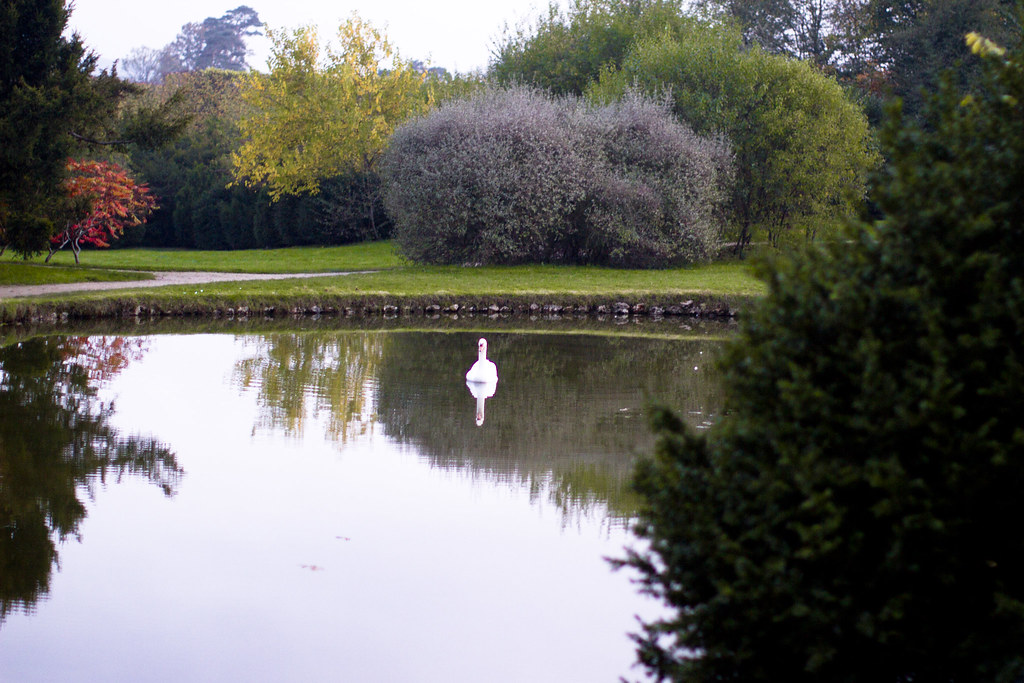 a swan on a lake at Versailles 1
