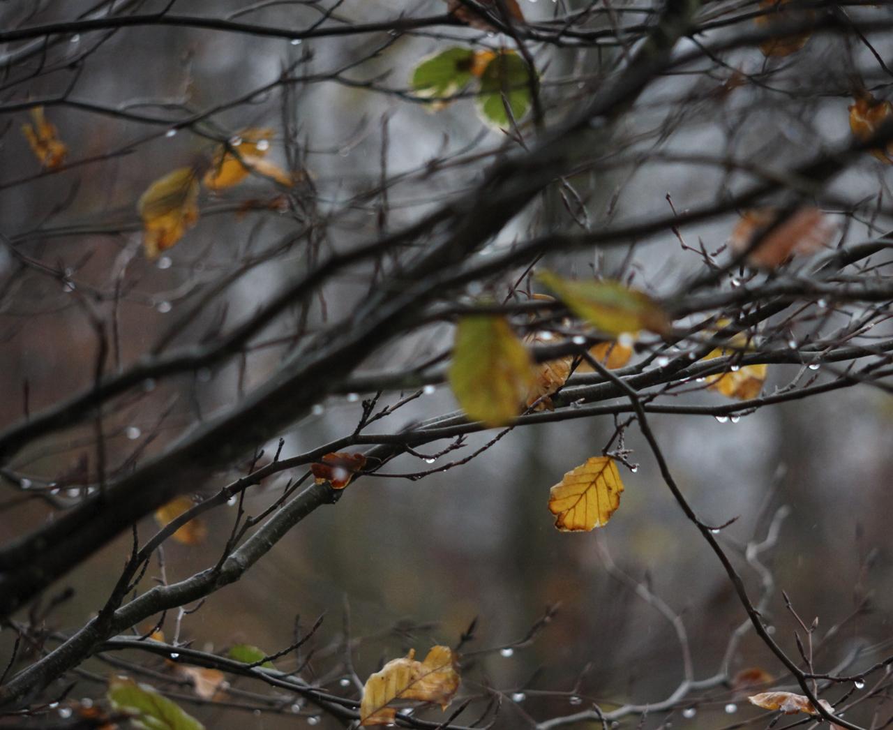 Late Fall