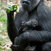 Mom & Baby eat greens_DSC0509 by PSmoot1