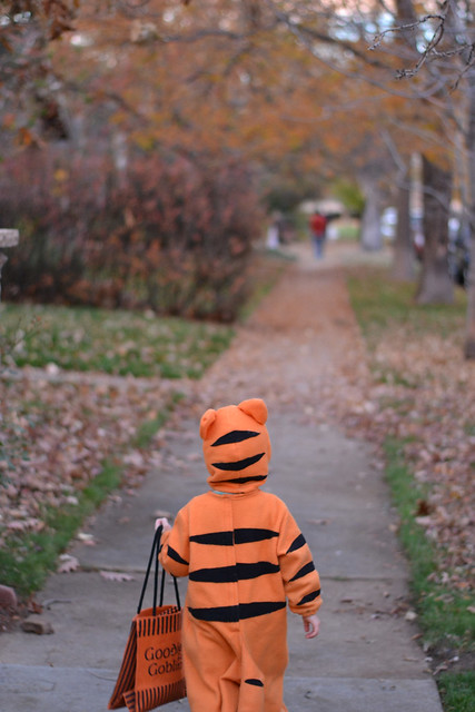 Trick or treat, little tiger!