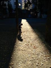 朝の光を浴びるとらちゃん (2012/11/2)