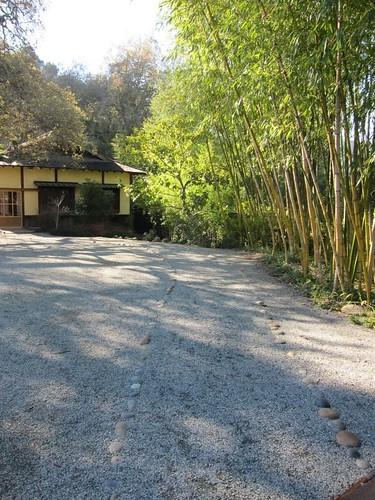 Hakone Japanese Gardens, Saratoga, CA, bamboo IMG_2316