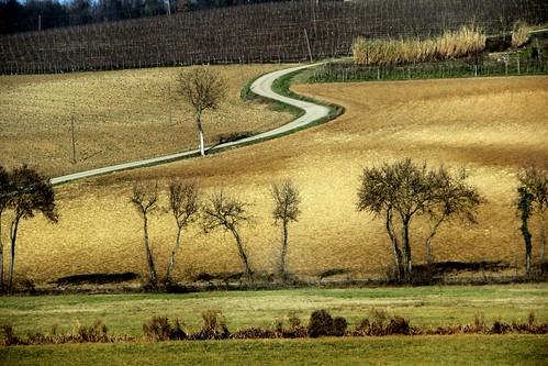 road trees digital canon photography eos rebel landscapes reflex italian view hills fields piedmont t3i monferrato silenci williamwordsworth