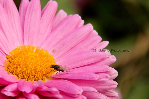 IMG_1255 by ShubhenduPhotography