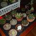 foto plantas colindres 2