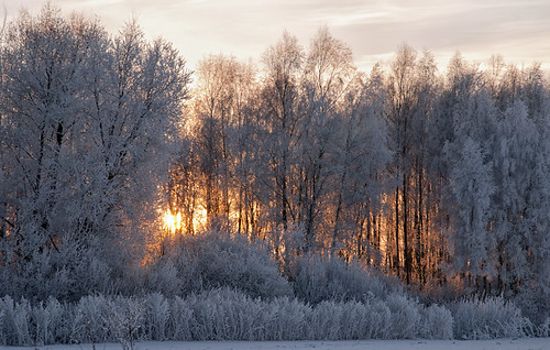 winter sunset snow forest frost lithuania lietuva žiema šerkšnas