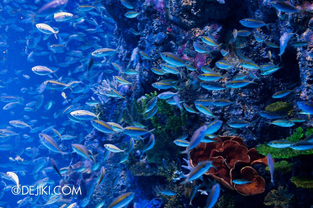 S.E.A. Aquarium - Dancing Blues