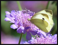 IMG_8143 Has a Thing for Lavender BB 7-24-16