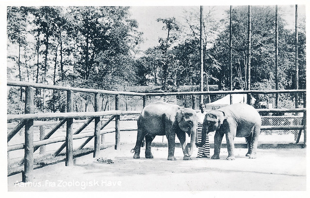 kolding zoo thai tantra Aarhus