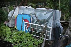 frost protected garden 033